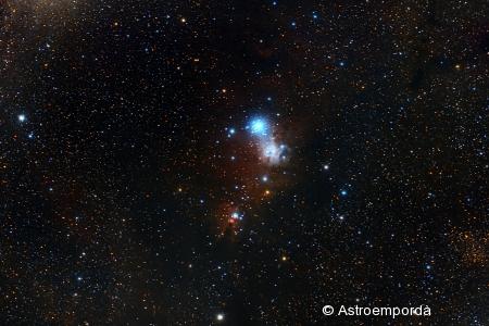 Nebulosa del con NGC 2264