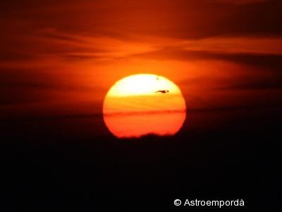 Trànsit de Venus amb ocell 2