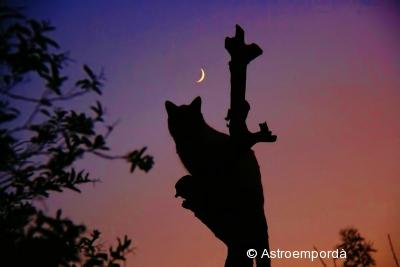 El gat mirant la lluna